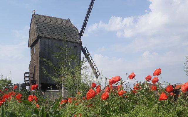 Bockwindmühle Langeneichstädt