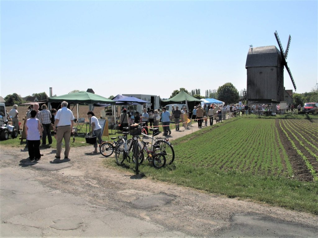 Bild von Bockwindmühle zum Mühlentag